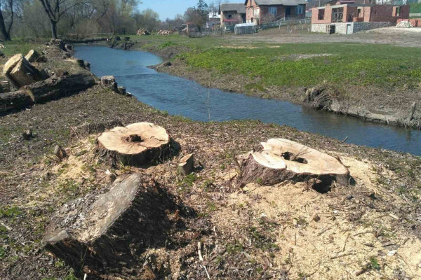 Поблизу Тернополя незаконно зрізали 80 дерев