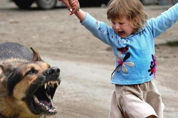 Хотіла погладити тварину: у Тернополі собака покусала 9-річну дівчинку