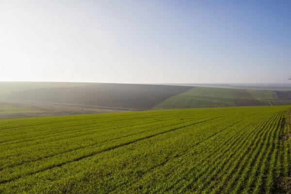 Дитячому інтернату у Петриках повернули 10 гектарів землі