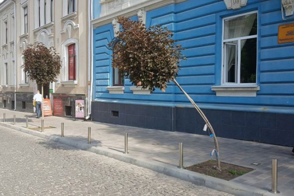 У центрі Тернополя вандали намагалися зламати червонолисті клени