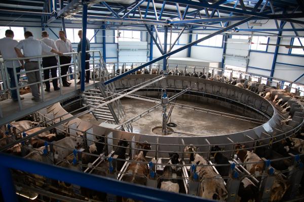 «Бучачагрохлібпром» споруджує на Тернопільщині корівники та доїльні комплекси