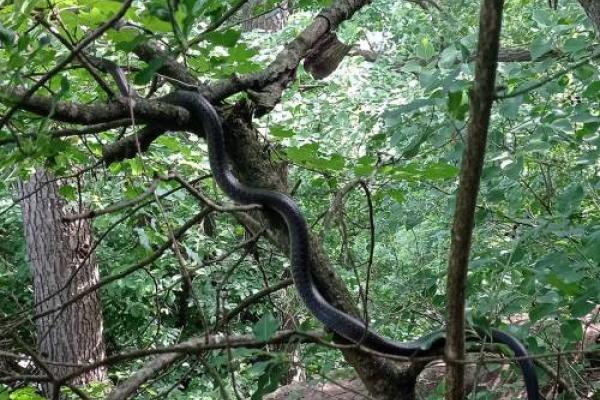 Відпочивальник неподалік Джуринського водоспаду натрапив на двометрову змію