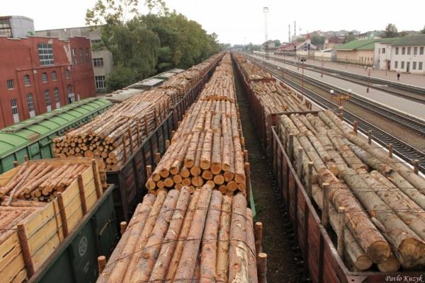 Незаконно перевозив деревину: на Тернопільщині судитимуть посадовця