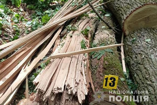 Двоє мешканців Тернопільщини незаконно вирубували дерева