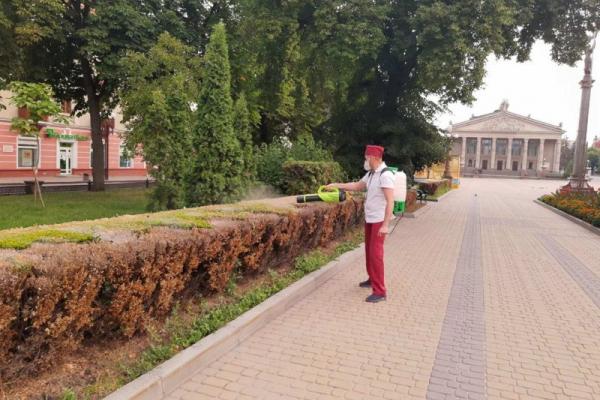 У Тернополі розпочали боротьбу зі шкідниками на зелених насадженнях
