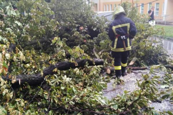 Дерево впало на автомобіль: на Тернопільщини рятувальники продовжують ліквідовувати наслідки негоди