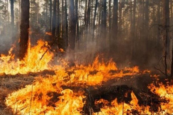 На Тернопільщині судили чоловіка, який спричинив пожежу у лісі
