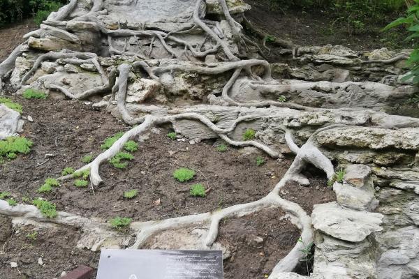 «Трон природи»: скульптура з  Тернопільщини здобула перше місце на міжнародному конкурсі