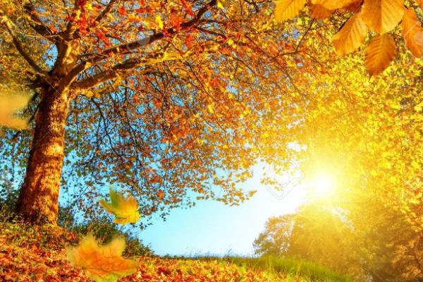 27 градусів тепла: у вихідні на Тернопілля повернеться літо