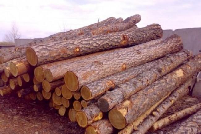 Ліси Тернопільщини потерпають від ласих на легку наживу