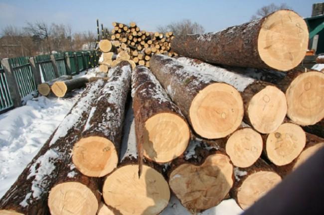 У Монастириськах працює нелегальний склад лісової продукції (Відео)