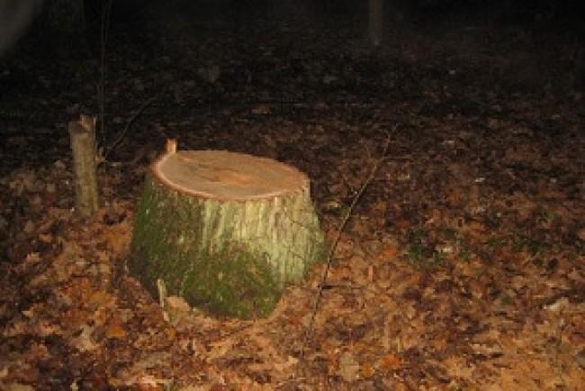 На Тернопільщині продовжують виявляти незаконні вирубки дерев