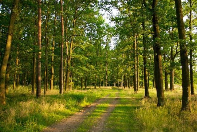 У 2017 році у Тернопільській області посадили 645 га лісу