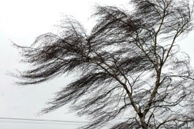 Штормове попередження на Тернопільщині: у четвер, 14 вересня, сильні вітри