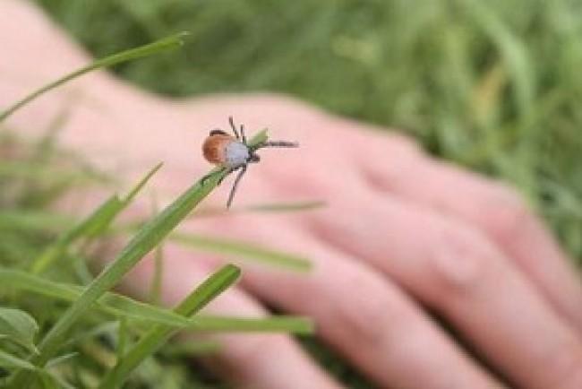 Тернополяни просять очистити парків від кліщів
