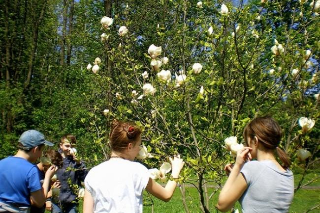 У Кременецькому ботанічному саду заквітли диво-дерева (Фото)