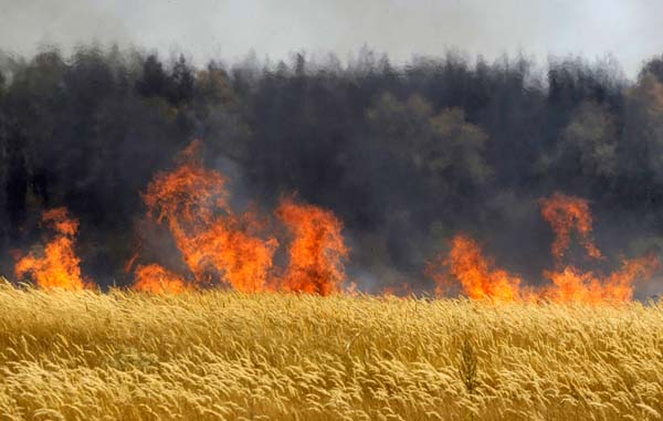 На Тернопільщині оголошено найвищий рівень пожежної небезпеки