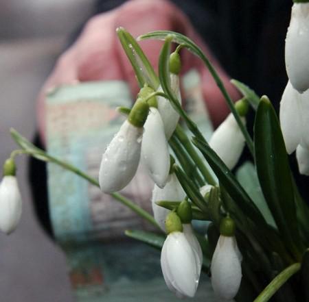 Державна екологічна інспекція у Тернопільській області закликає не купувати первоцвітів