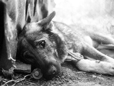 У Тернополі рятували собаку з колодязя (Фото)