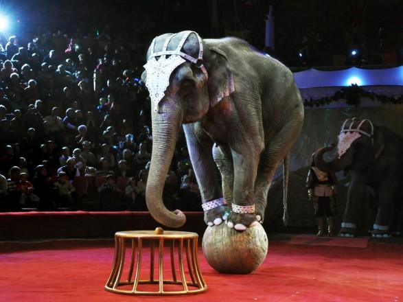 У Тернополі заборонили виступи пересувних цирків із тваринами
