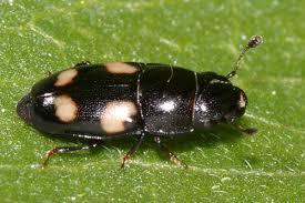 На Тернопільщині люди потерпають від комах