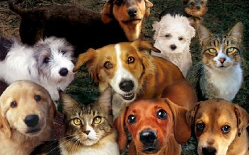 У Тернополі за місяць відкриється соціальна ветеринарна клініка (Відео)
